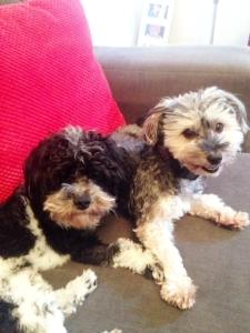 Benji & Sonny