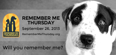 Please SHARE: Orphaned pets across the world need your voice today